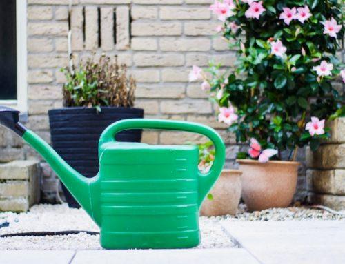 Growbox Bewässerung – So wird es richtig gemacht!