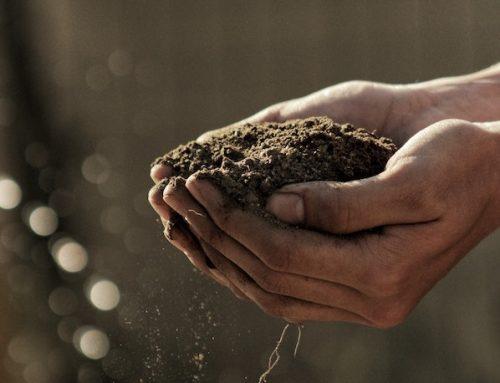 Die richtige Auswahl deiner Grow Erde